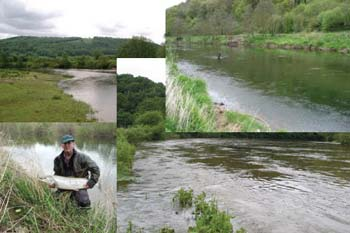 wye salmon association more rods on the river