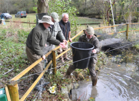 Help The Recovery of the Wye Salmon