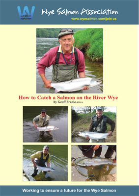 How to catch a salmon