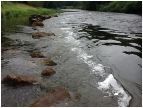Dead salmon and juvenile fish reported  in River Wye