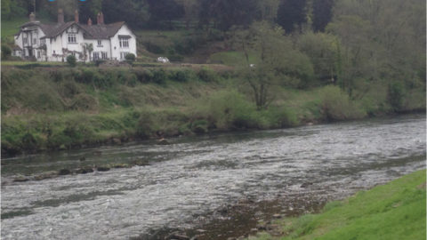 Wye Salmon Association Newsletter 16