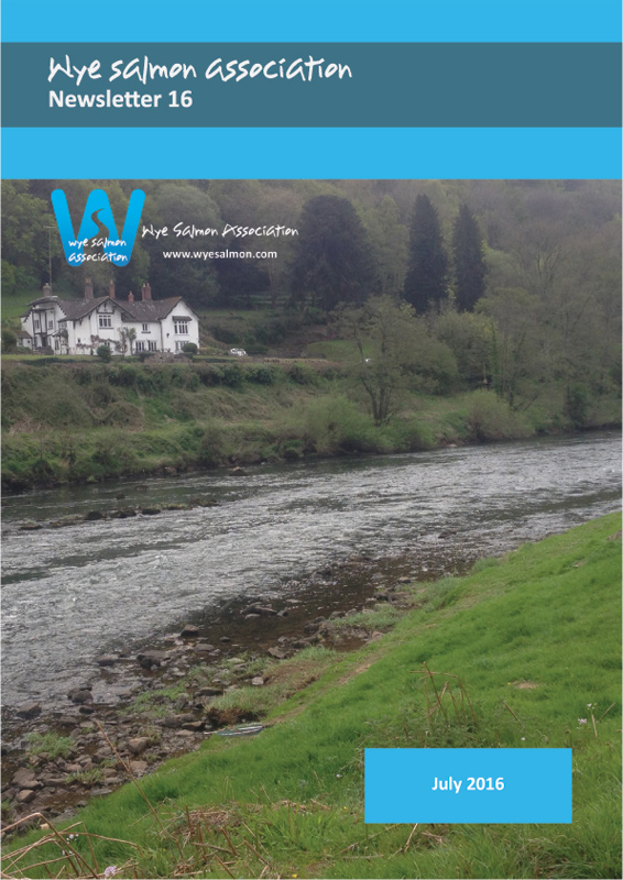 WSA-Newsletter-16
