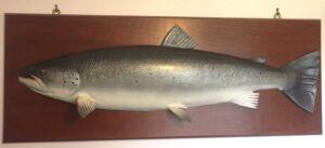 img_0061_salmoncast