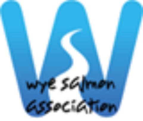 WSA Newsletter Nov 2016